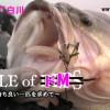 【路亚视频】冬季 白川 琵琶湖BASS